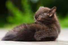 Kitten washing up Stock Photos