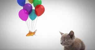Kitten watching fish tied to balloons. Digital composite of Kitten watching fish tied to balloons Royalty Free Stock Image