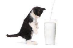 Kitten Watching Milk Pour Into linda al vidrio Imagenes de archivo