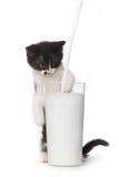 Kitten Watching Milk Pour Into linda al vidrio Imagen de archivo