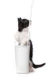 Kitten Watching Milk Pour Into linda al vidrio Fotos de archivo