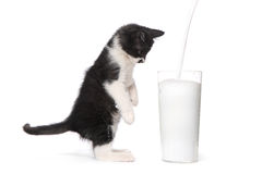 Kitten Watching Milk Pour Into mignonne par verre Images stock
