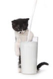 Kitten Watching Milk Pour Into mignonne par verre Image stock