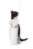Kitten Watching Milk Pour Into mignonne par verre Photos stock