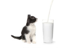 Kitten Watching Milk Pour Into mignonne par verre Photographie stock libre de droits