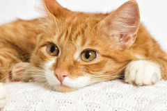 Kitten watching Royalty Free Stock Photos