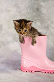 Kitten in water shoe Royalty Free Stock Image