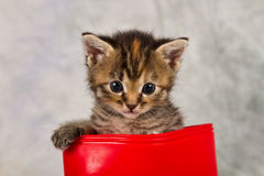 Kitten in water shoe Royalty Free Stock Image