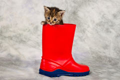 Kitten in water shoe Stock Photo