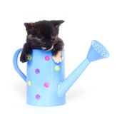 Kitten in watering can stock photography