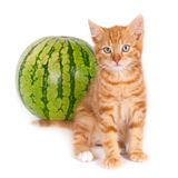 Kitten and watermelon Stock Photos