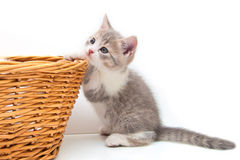 Kitten with a wattled basket Stock Photography