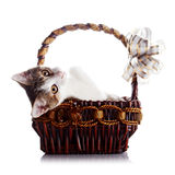 Kitten in a wattled basket with a bow. Stock Photography