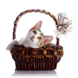 Kitten in a wattled basket with a bow. Royalty Free Stock Photos