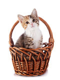 Kitten in a wattled basket. Royalty Free Stock Photo