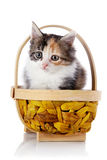 Kitten in a wattled basket. Royalty Free Stock Photography