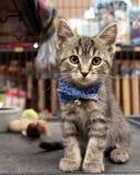 Kitten Wearing bonito um laço e uma adoção de espera em um Pe imagem de stock