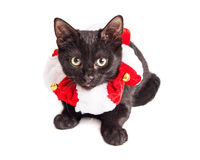 Kitten Wearing Christmas Collar adorable Imágenes de archivo libres de regalías