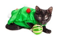 Kitten Wearing Christmas Tree Outfit linda Foto de archivo
