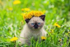 Kitten wearing a crown of dandelions Royalty Free Stock Image