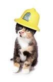 Kitten wearing a firemans helmet studio Stock Image