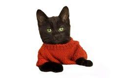 Kitten wearing a jumper. Cute kitten wearing a little red jumper isolated Stock Image