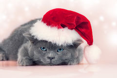 Kitten wearing a Santa hat Royalty Free Stock Image