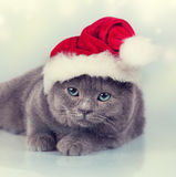 Kitten wearing a Santa hat Stock Images