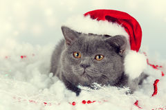 Kitten wearing Santa hat Stock Photo