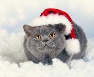 Kitten wearing Santa hat Stock Photography