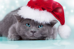Kitten wearing a Santa hat Stock Photo