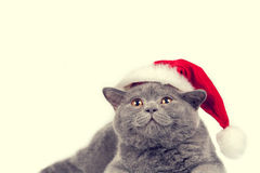 Kitten wearing Santa hat Royalty Free Stock Photo