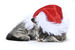 Kitten wearing a Santa hat Stock Photography