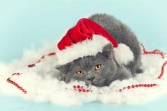 Kitten wearing Santa hat Royalty Free Stock Photography