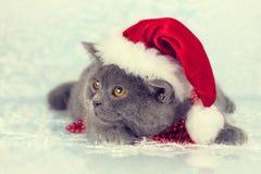 Kitten wearing Santa hat Royalty Free Stock Photos
