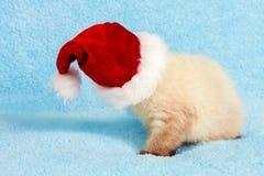 Kitten wearing Santa hat Royalty Free Stock Image