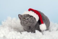 Kitten wearing Santa hat Stock Images
