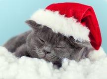 Kitten wearing Santa hat Royalty Free Stock Photo