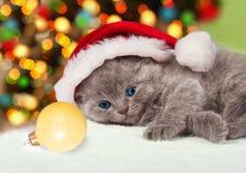 Kitten wearing Santa's hat Royalty Free Stock Image