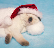 Kitten wearing Santa's hat Stock Images