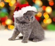 Kitten wearing Santa's hat Stock Images