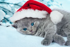 Kitten wearing Santa's hat Stock Image
