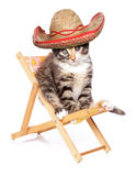 Kitten wearing a sombrero on a deck chair. Studio cutout royalty free stock image