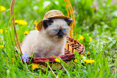 Kitten wearing straw hat Stock Photo