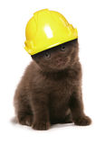 Kitten wearing a yellow builders hard hat Stock Images