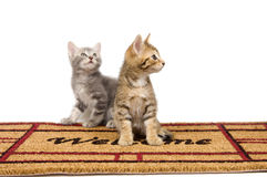 Kitten and welcome mat Stock Images