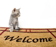 Kitten and welcome mat Royalty Free Stock Image