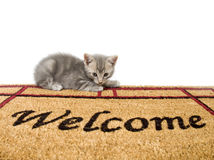 Kitten and welcome mat Royalty Free Stock Photos