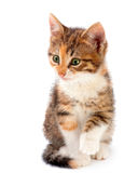 Kitten on white Royalty Free Stock Photography