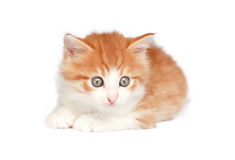 Kitten in white Stock Photo